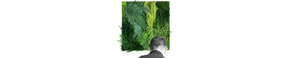 Tableaux et murs végétaux