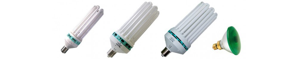 Ampoules éco / CFL